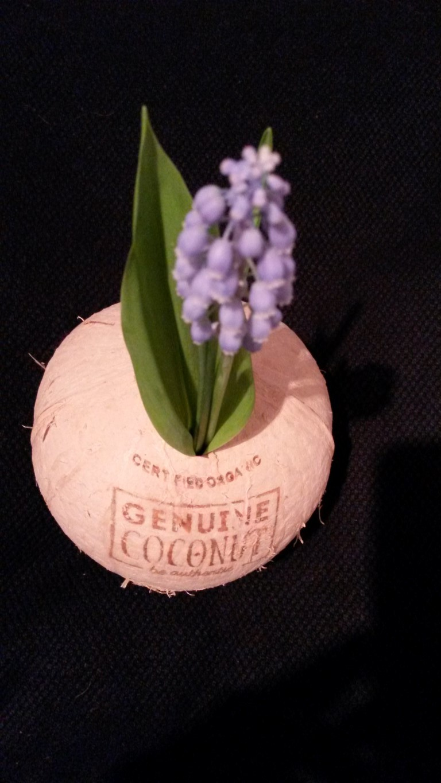 Kokosnuss Vase (1)