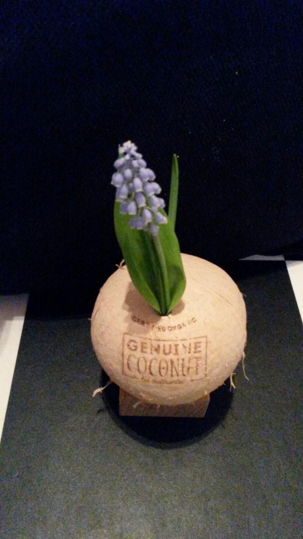 Kokosnuss Vase (2)