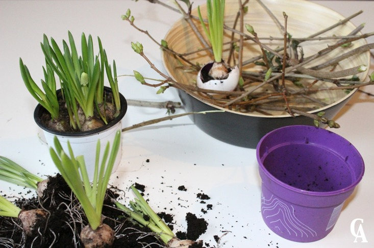 Ostergesteck_Pflanzen_in_Ostereier_gepflanzt_und_mit-Streuchern_dekoriert_Pflanzen_einpflanzen_Hand-im-Glück