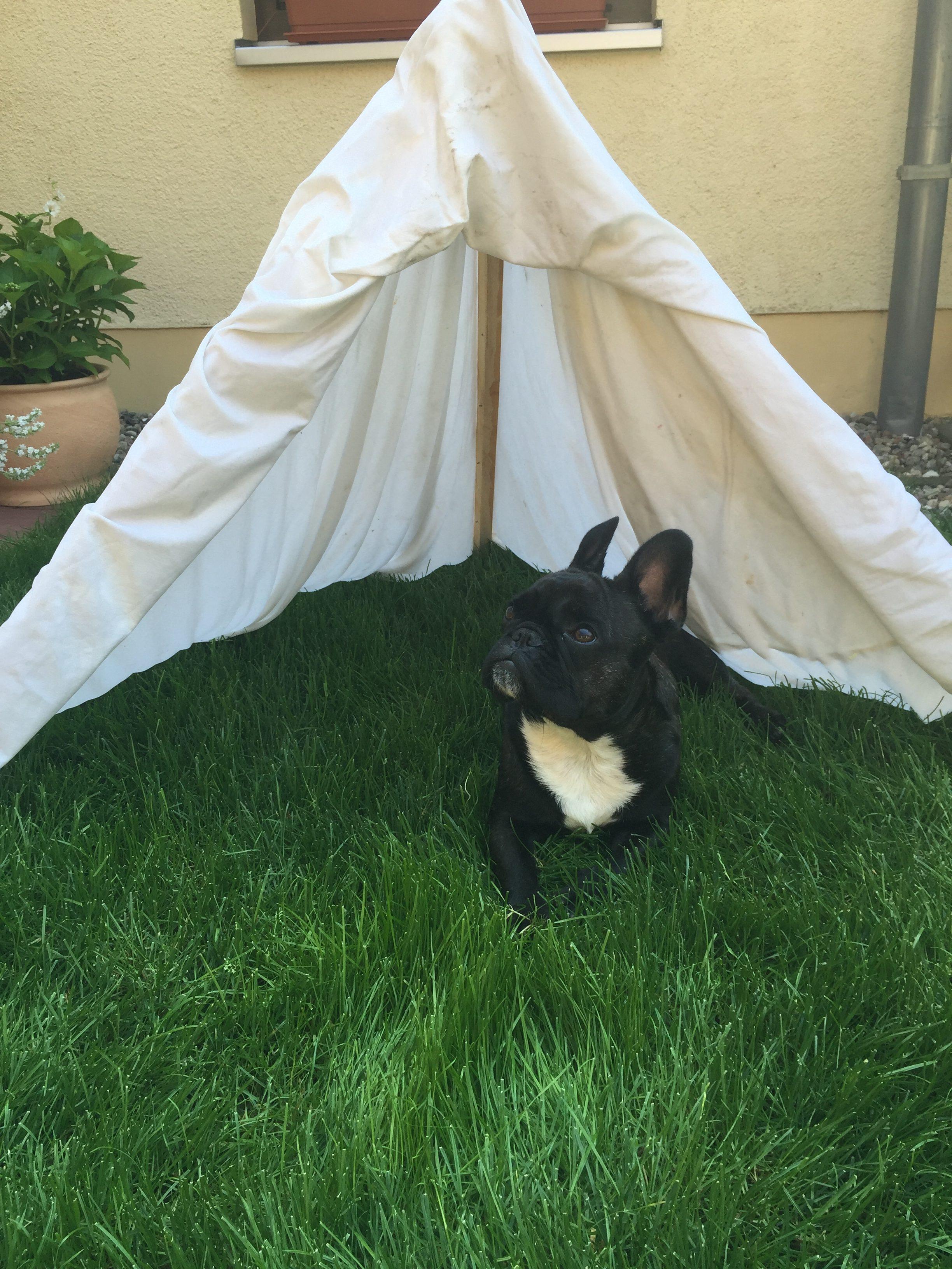 Hundezelt selber bauen (schützt vor Hitze)