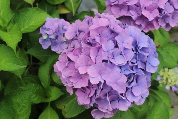 Frische-Blume-für-Geburtstagskarte