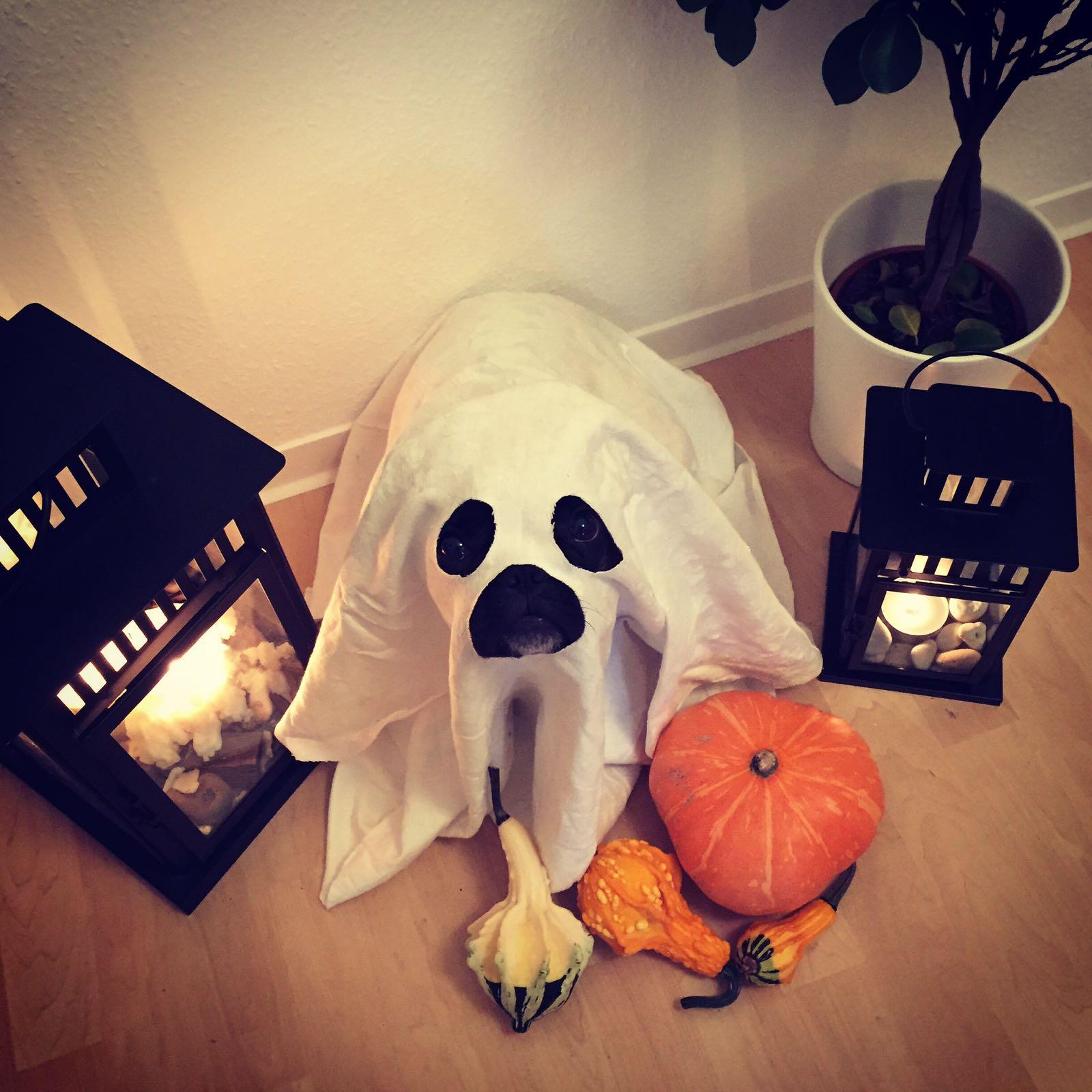 Halloweenkostüm Geist für den Hund von heute Hand im Glück