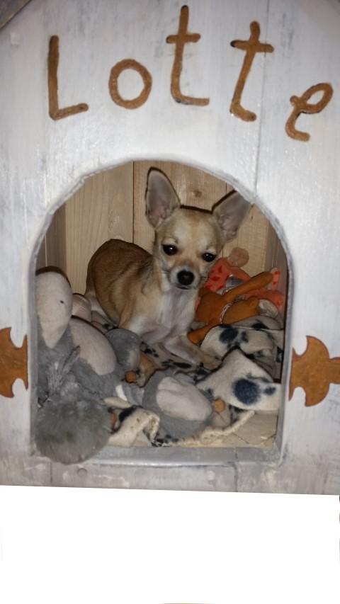 Hundehütte aus Holz Hand im Glück