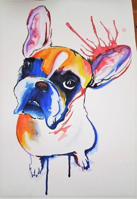 Bunte französische Bulldogge (Small)
