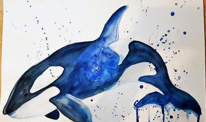 Orca in Aquarell selber malen