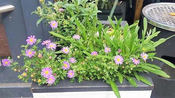 Blumenkasten aus Getränkekisten Hand im Glück Garten