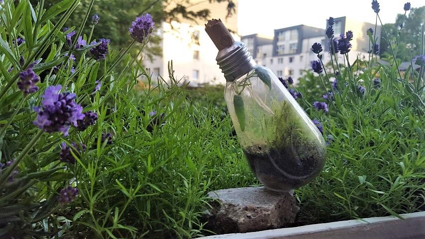 Terrarium Glühbirne zum Hinstellen Hand im Glück (