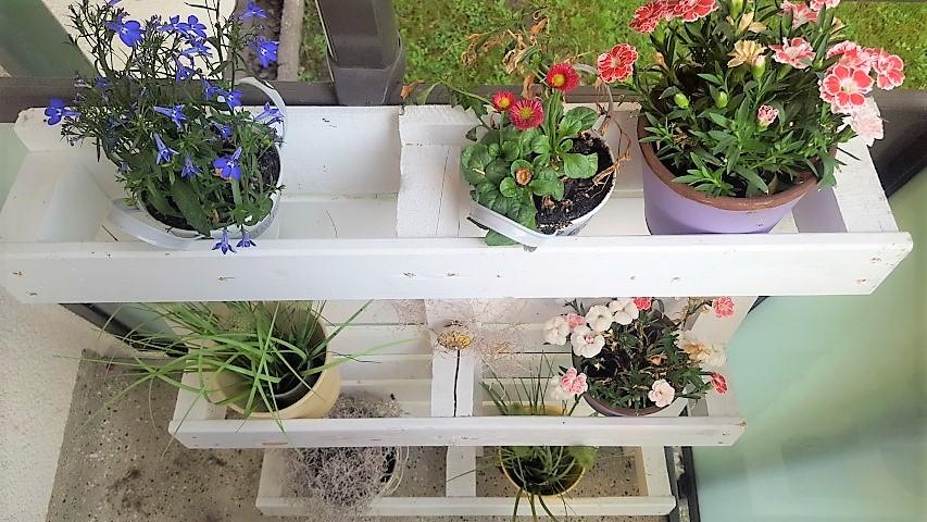 Palette_Blumenkasten_Garten_Balkon_Hand-im-Glueck