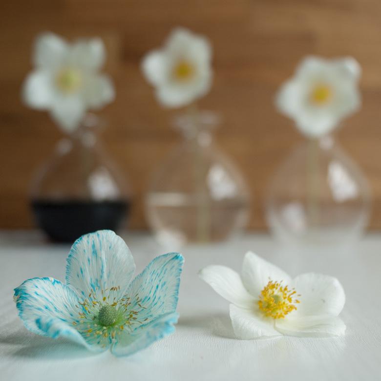 Blumen-faerben_Hand-im-Glueck