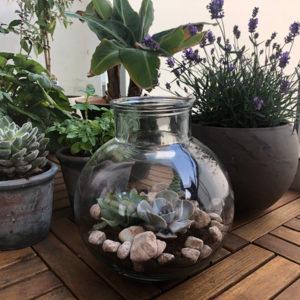 DIY Kleiner Sukkulenten-Garten