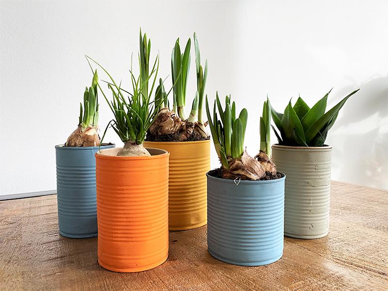 DIY Upcycling: Alte Konservendosen bemalen zu frühlingshaften Blumen- und Kräutertöpfen